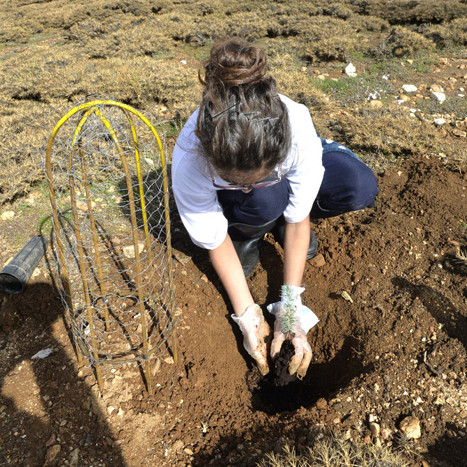 Plantation-Day-4---2015---4